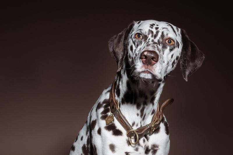 Kösler Fotografie, Workshop, Studiofotografie, Hunde Portrait